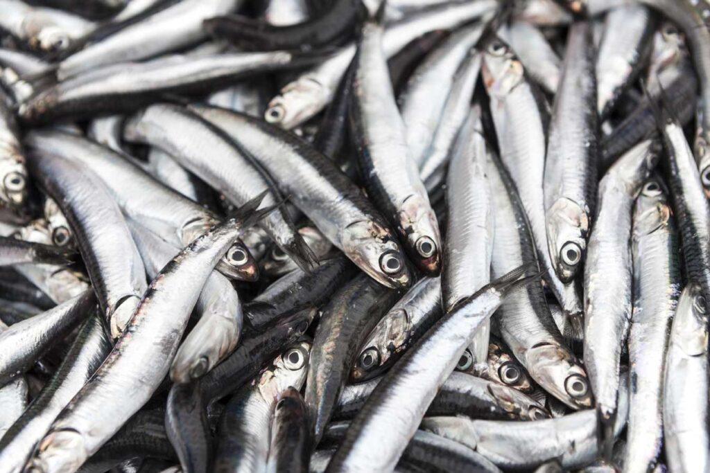 Fish market: boquerones