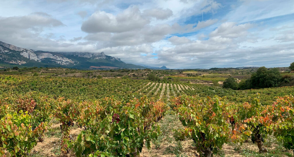 Rioja, Spain's most famous wine region, CÚRATE Trips