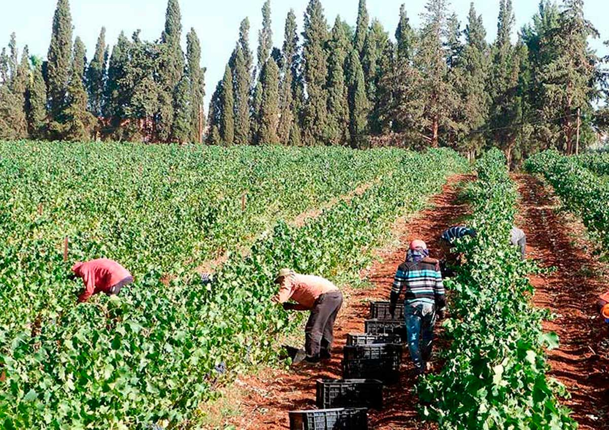 Wines of Morocco, one more reason to travel to Morocco, CÚRATE Trips