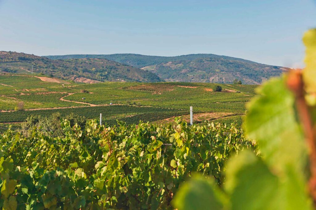 Embark on a day trip to Ribera del Duero with Paladar y Tomar