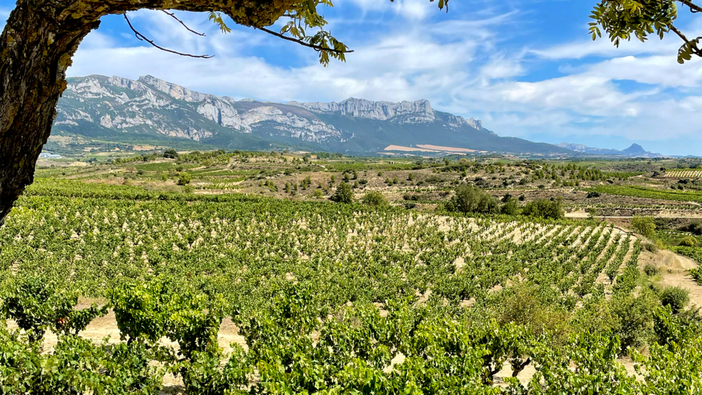 Rioja vineyards in Samaniego, a private tour with Cúrate Trips